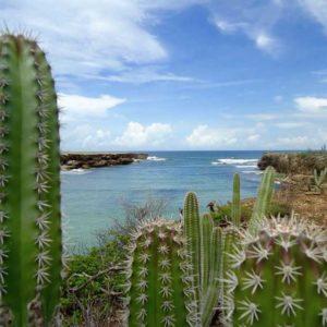 curaçao-en-aruba_cactus